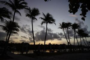 Skies Painted by Palms