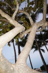 Funky Tree @ the Inlet